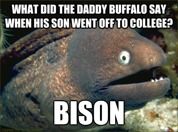 What did the daddy buffalo say when his son went off to college? BISON - What did the daddy buffalo say when his son went off to college? BISON  Bad Joke Eel