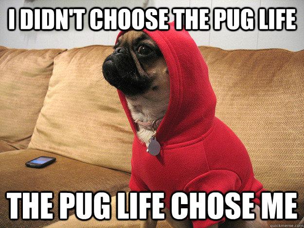 I didn't choose the pug life The pug life chose me