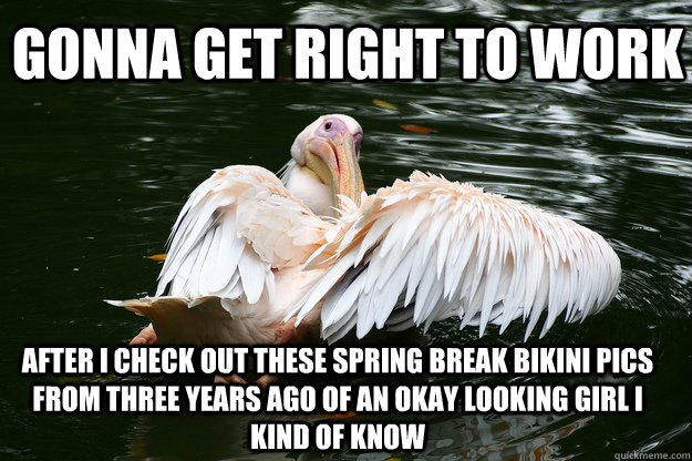 gonna get right to work After i check out these spring break bikini pics from three years ago of an okay looking girl I kind of know - gonna get right to work After i check out these spring break bikini pics from three years ago of an okay looking girl I kind of know  Procrastinator Pelican
