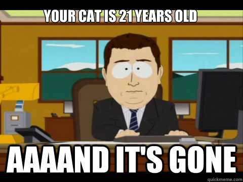 Your cat is 21 years old Aaaand it's gone - Your cat is 21 years old Aaaand it's gone  Misc