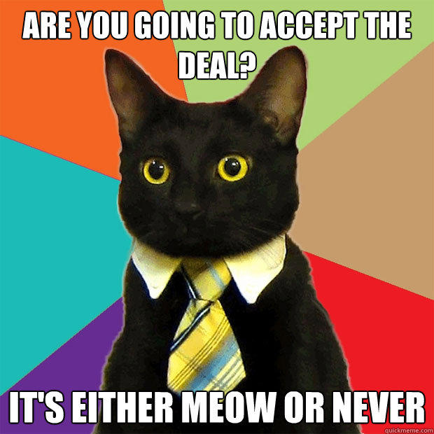 are you going to accept the deal? it's either meow or never - are you going to accept the deal? it's either meow or never  Business Cat