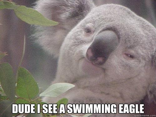 Dude I see a swimming eagle