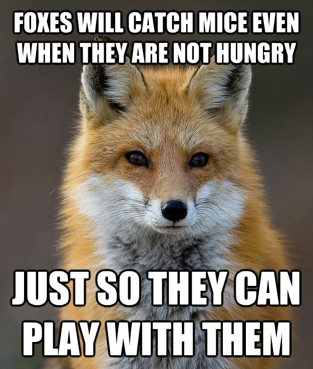 FOXES WILL CATCH MICE EVEN WHEN THEY ARE NOT HUNGRY JUST SO THEY CAN PLAY WITH THEM