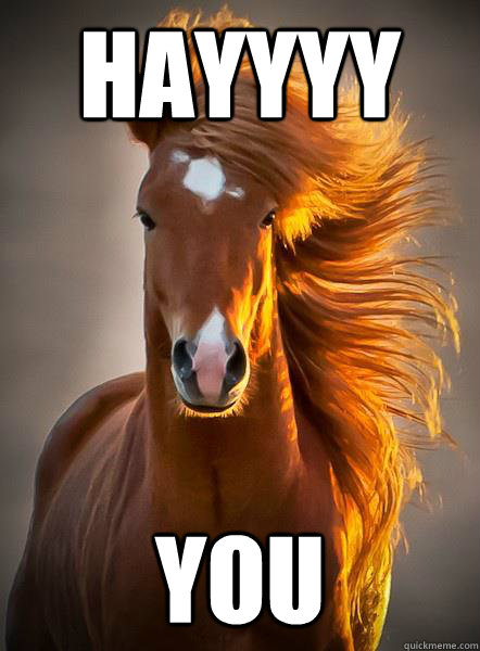 hayyyy you  - hayyyy you   Ridiculously Photogenic Horse