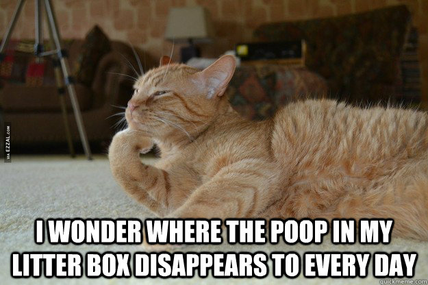 I wonder where the poop in my litter box disappears to every day