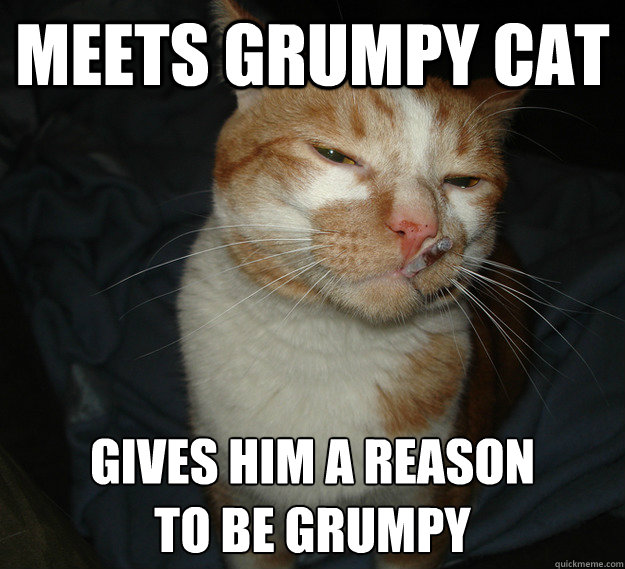 Meets Grumpy Cat Gives Him a Reason to Be Grumpy - Meets Grumpy Cat Gives Him a Reason to Be Grumpy  Cool Cat Craig