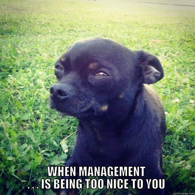 WHEN MANAGEMENT . . . IS BEING TOO NICE TO YOU Skeptical Dog