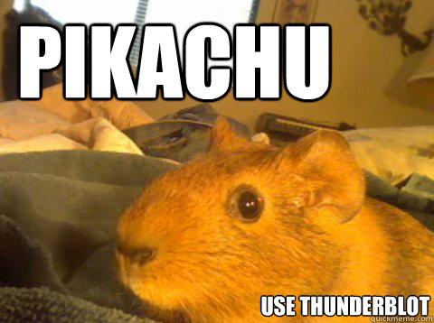 Guinea Pig Meme memes | quickmeme