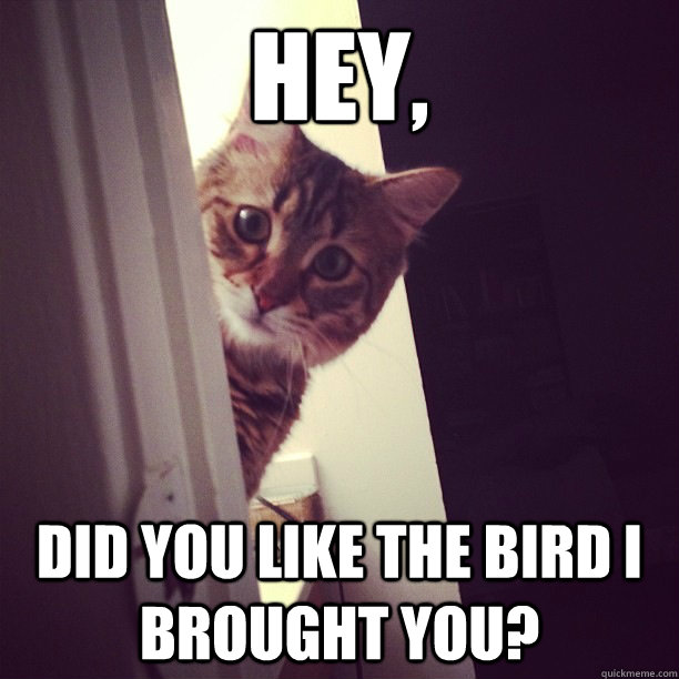 Hey, did you like the bird i brought you? - Hey, did you like the bird i brought you?  Concerned Cat