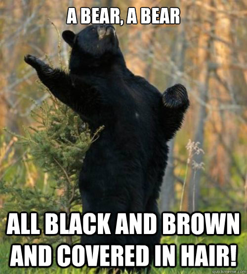 a bear, a bear all black and brown and covered in hair!