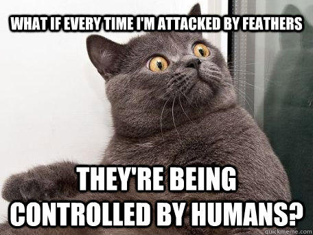 what if every time i'm attacked by feathers they're being controlled by humans?  conspiracy cat
