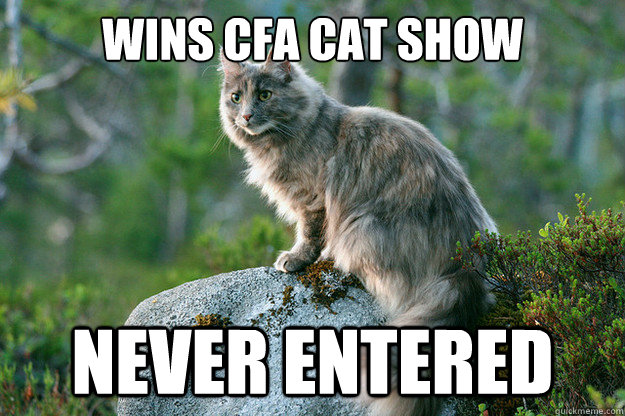 Wins cfa cat show never entered
