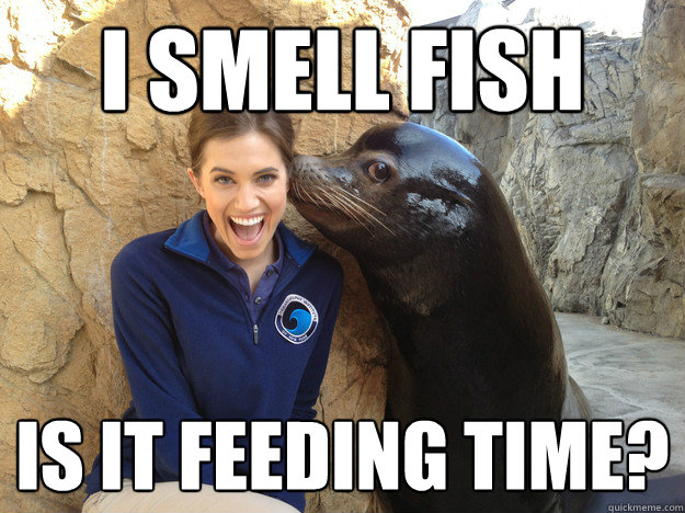 I smell fish  is it feeding time? - I smell fish  is it feeding time?  Sea Lion