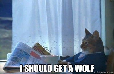 I should get a wolf -  I should get a wolf  I should buy a bike