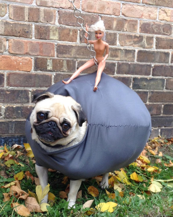 Probably the best dog Halloween costume I've seen this year -   Misc