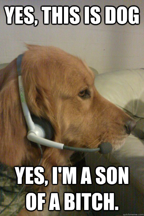 yes, this is dog yes, i'm a son of a bitch.