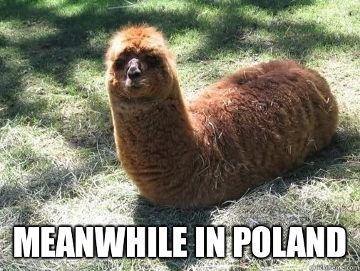Meanwhile in poland  Alpacapillar