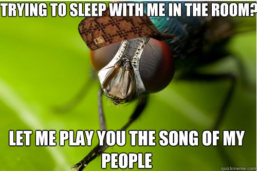 Trying to sleep with me in the room? Let me play you the song of my people - Trying to sleep with me in the room? Let me play you the song of my people  Scumbag Fly