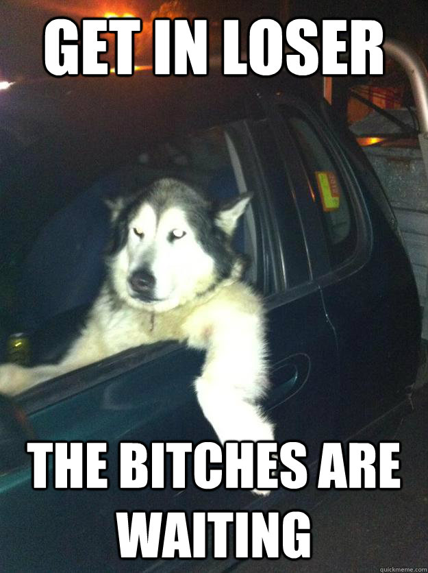 Get in loser the Bitches ARE waiting  - Get in loser the Bitches ARE waiting   Mean Dog