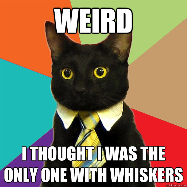 weird i thought i was the only one with whiskers - weird i thought i was the only one with whiskers  Business Cat