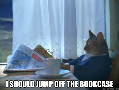 i should jump off the bookcase -  i should jump off the bookcase  The One Percent Cat