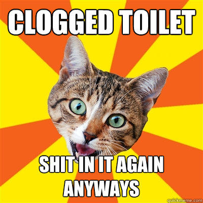 clogged toilet shit in it again anyways  Bad Advice Cat