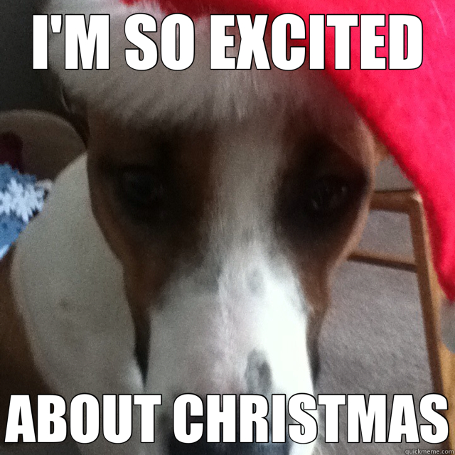 I'M SO EXCITED ABOUT CHRISTMAS - Christmas Dog - quickmeme