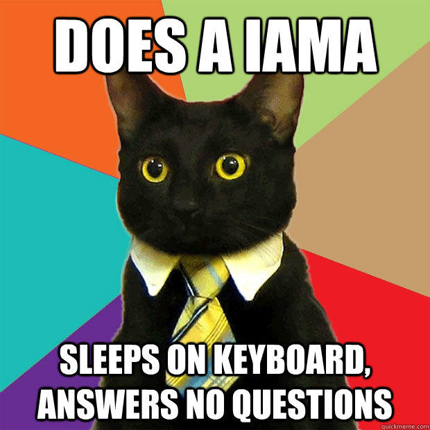 Does a IAMA Sleeps on keyboard, answers no questions  Business Cat
