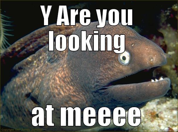 Y ARE YOU LOOKING AT MEEEE Bad Joke Eel