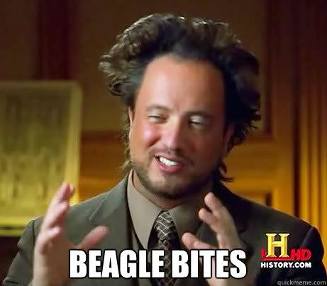 Beagle Bites