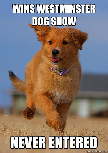 Wins westminster dog show never entered - Wins westminster dog show never entered  Ridiculously Photogenic Puppy