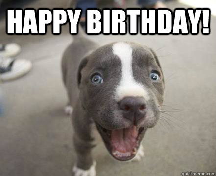 Image result for happy birthday animals funny