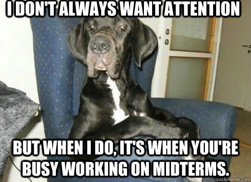 I don't always want attention but when i do, it's when you're busy working on midterms.
