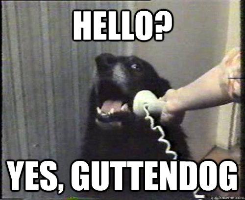 Hello? Yes, Guttendog