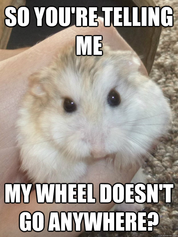 So you're telling me My wheel doesn't go anywhere?   Sad Hamster