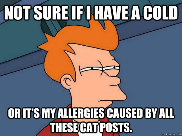 Not sure if I have a cold or it's my allergies caused by all these cat posts. - Not sure if I have a cold or it's my allergies caused by all these cat posts.  Futurama Fry