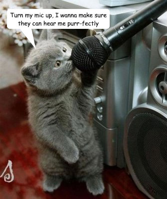 Turn my mic up, I wanna make sure they can hear me purr-fectly  Singing cat