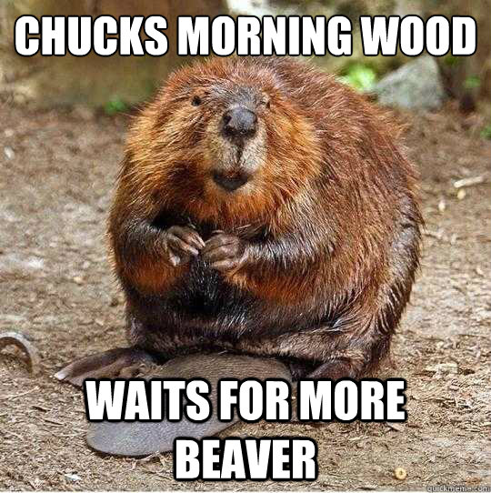 Chucks morning wood Waits for more beaver