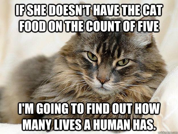 a5149d09f7772f697fb77e0766cbbb74cbbd2c750444db76484ce5d814247178 cat food memes quickmeme,Food Cat Meme