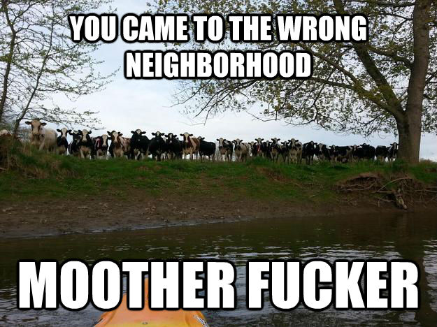 YOU CAME TO THE WRONG NEIGHBORHOOD  MOOTHER FUCKER  - YOU CAME TO THE WRONG NEIGHBORHOOD  MOOTHER FUCKER   untitled meme