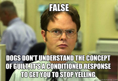 False Dogs don't understand the concept of guilt, it's a conditioned response to get you to stop yelling - False Dogs don't understand the concept of guilt, it's a conditioned response to get you to stop yelling  Dwight