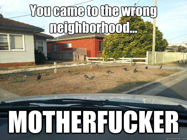 You came to the wrong neighborhood... MOTHERFUCKER - You came to the wrong neighborhood... MOTHERFUCKER  Magpie Thugs