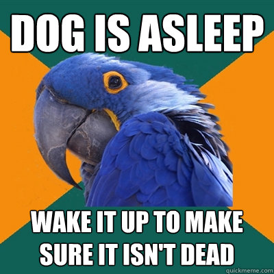 Dog is asleep Wake it up to make sure it isn't dead - Dog is asleep Wake it up to make sure it isn't dead  Paranoid Parrot