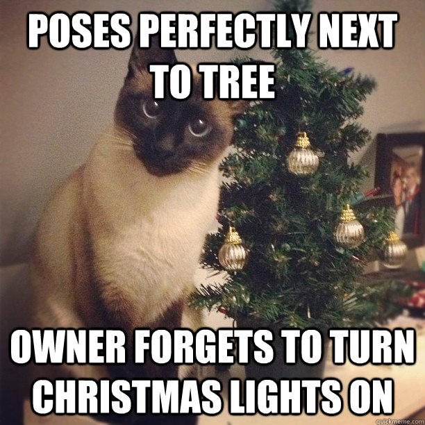 Cat Pose Fail memes | quickmeme