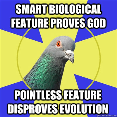 Smart biological feature proves god Pointless feature disproves evolution  Religion Pigeon