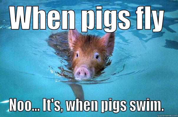 When Pigs Fly Quickmeme