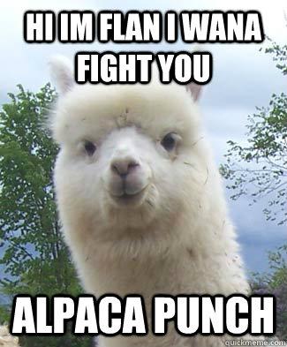 hi im flan i wana fight you Alpaca punch  Alpaca-pun Alpaca
