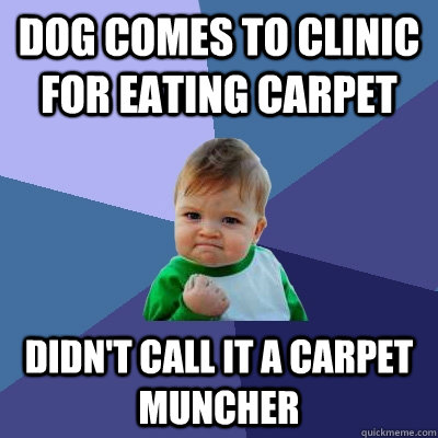 Dog comes to clinic for eating carpet Didn't call it a carpet muncher - Dog comes to clinic for eating carpet Didn't call it a carpet muncher  Success Kid