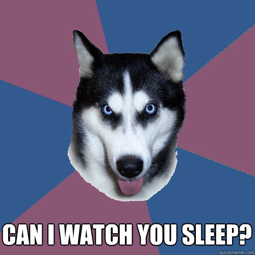 can i watch you sleep?  Creeper Canine
