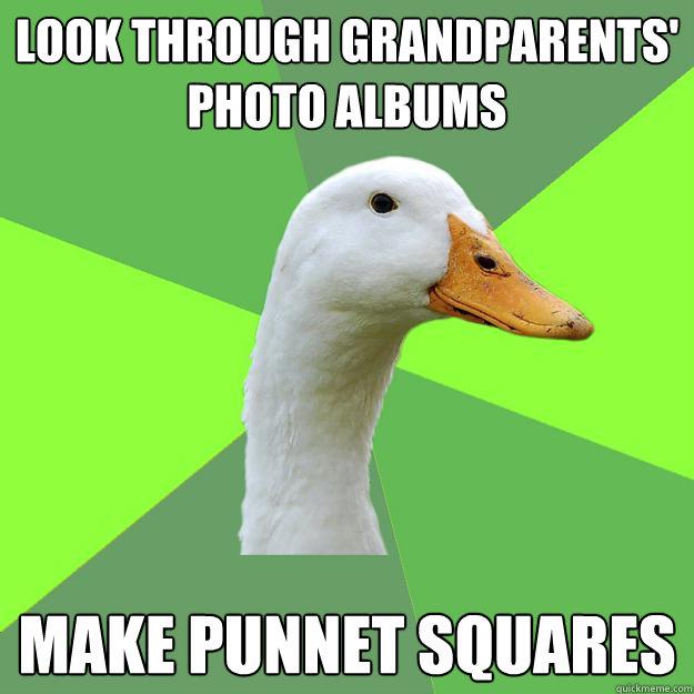Look through grandparents' photo albums make punnet squares  Biology Student Duck